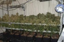 Cannabis Factory / Farm Cleaning